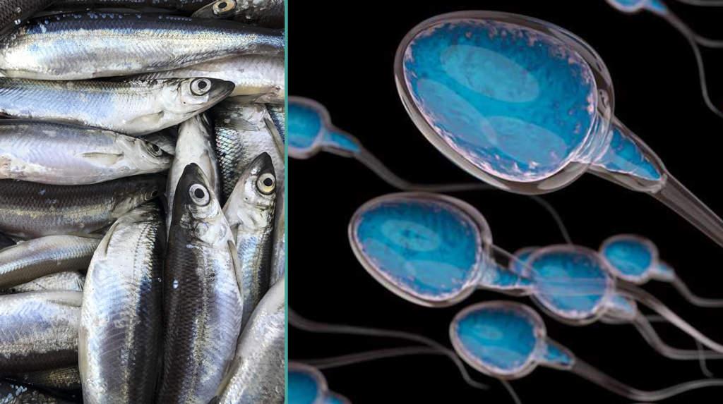 """<a href=""""https://www.aftonbladet.se/family/a/y3Vq6e"""">Forskare: Ät fisk och få bättre spermier</a>"""